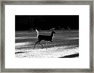 Framed Print featuring the photograph Glowing Buck by Lorna Rogers Photography