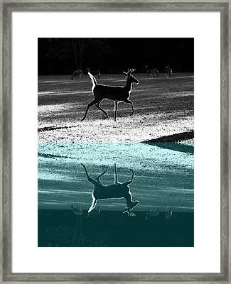Glowing Buck Reflection Framed Print