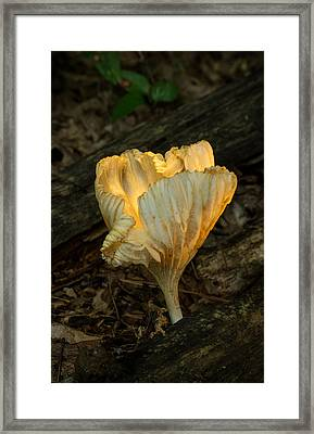 Glowing Cantharellus Mushroom Framed Print