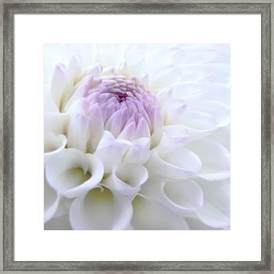 Glowing Dahlia Flower Framed Print by Jennie Marie Schell