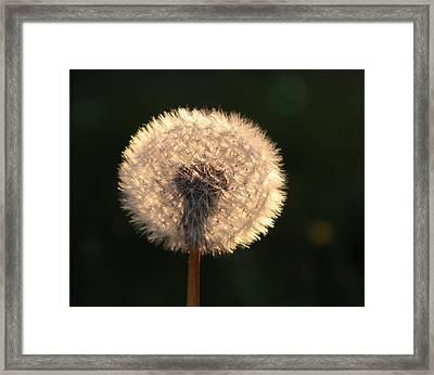 Glowing Dandelion Clock Framed Print