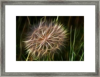 Glowing Dandelion Framed Print by Shane Bechler