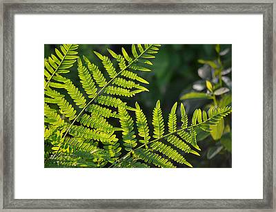 Glowing Fern Framed Print