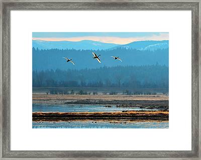 Glowing Flight  Framed Print by Annie Pflueger