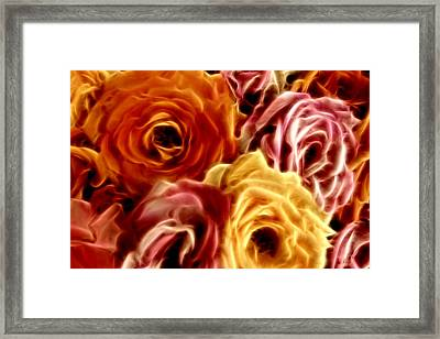 Glowing Full Roses Framed Print