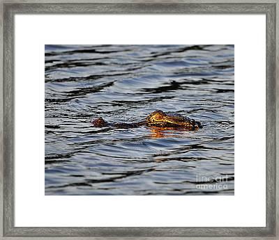 Glowing Gator Framed Print