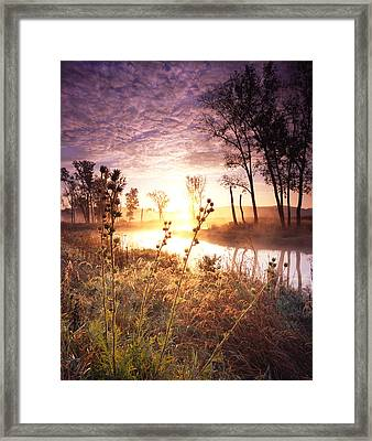 Glowing Grasses Framed Print by Ray Mathis