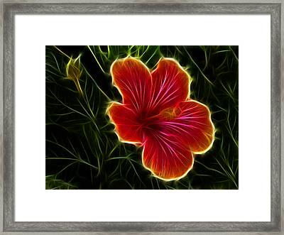 Glowing Hibiscus Framed Print by Shane Bechler