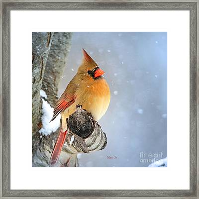 Glowing In The Snow Framed Print
