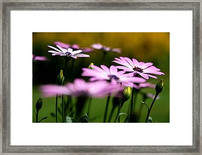 Glowing In The Sun Framed Print by Kim Lagerhem