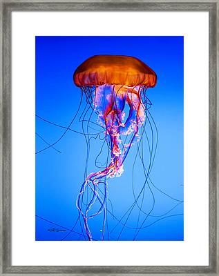 Glowing Jellyfish Framed Print