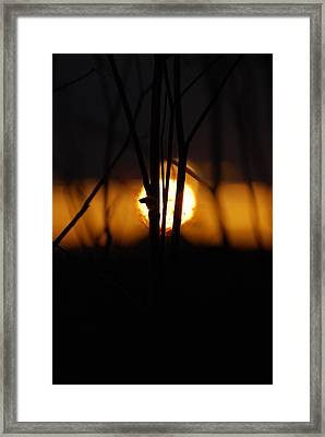 Framed Print featuring the photograph Glowing Lace by Jani Freimann