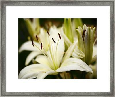 Glowing Lillies Framed Print by Alexandra  Rampolla