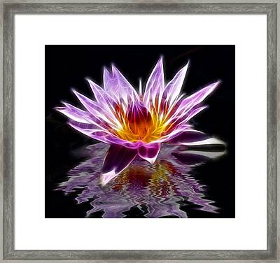 Glowing Lilly Flower Framed Print by Shane Bechler