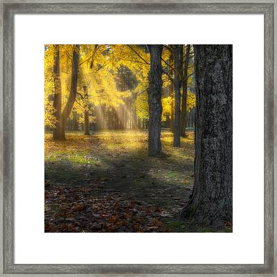 Glowing Maples Square Framed Print by Bill Wakeley