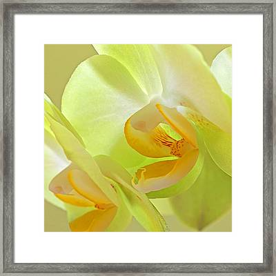 Glowing Orchid - Lemon And Lime Framed Print by Gill Billington