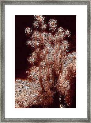Glowing Palm Framed Print by John Cardamone