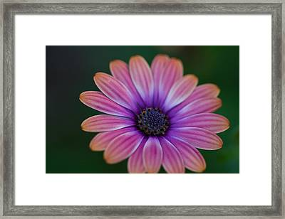 Glowing Pink Framed Print