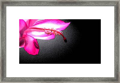Glowing Pink Framed Print by Mary Bedy