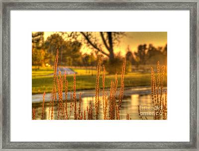 Framed Print featuring the photograph Glowing Plants In A Pond by Jim Lepard