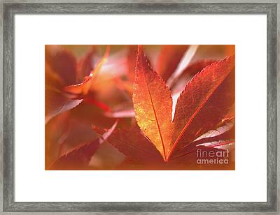 Glowing Red Leaves Framed Print