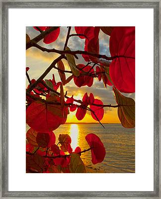 Glowing Red Framed Print by Stephen Anderson
