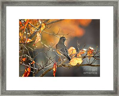 Glowing Robin 2 Framed Print