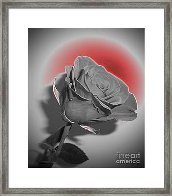 Glowing Rose Framed Print by Minding My  Visions by Adri and Ray