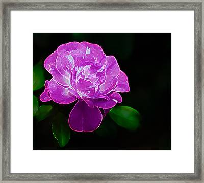 Glowing Rose II Framed Print