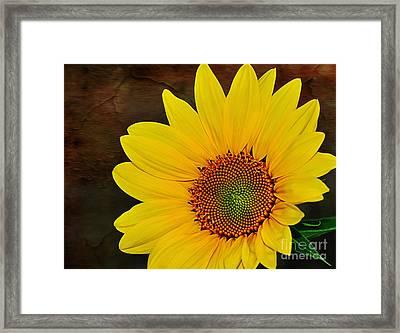 Glowing Sunflower Framed Print by Kaye Menner