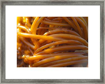 Glowing Tangle Of Kelp Framed Print by Sarah Crites