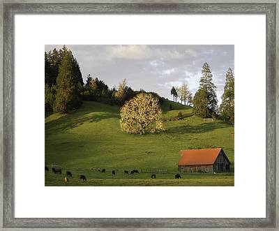 Glowing Tree Moss Framed Print