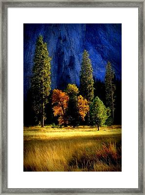 Glowing Trees Framed Print