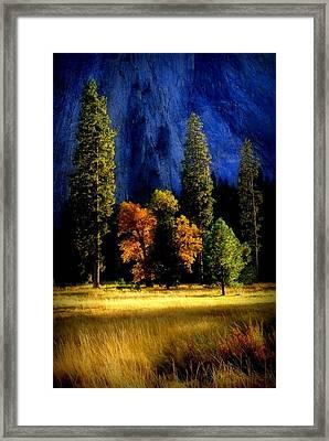 Glowing Trees Framed Print