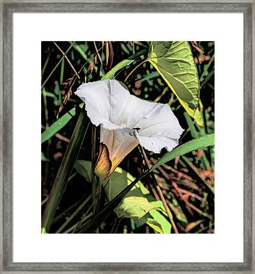 Framed Print featuring the photograph Glowing White Flower by Leif Sohlman