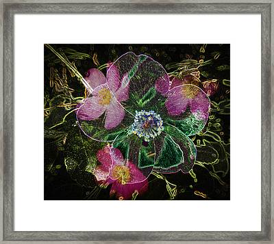 Glowing Wild Rose Framed Print