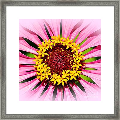 Glowing Zinnia - Square By Kaye Menner Framed Print