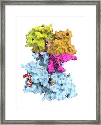 Glycogen Phosphorylase Molecule Framed Print