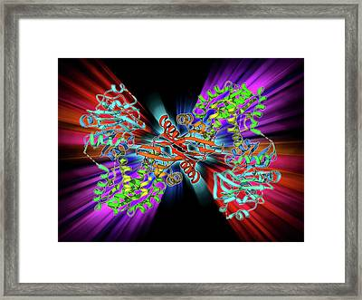 Gmp Synthetase Enzyme Framed Print by Laguna Design