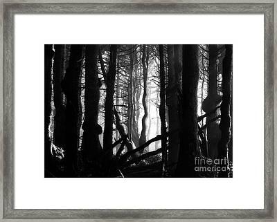 Gnarled Framed Print