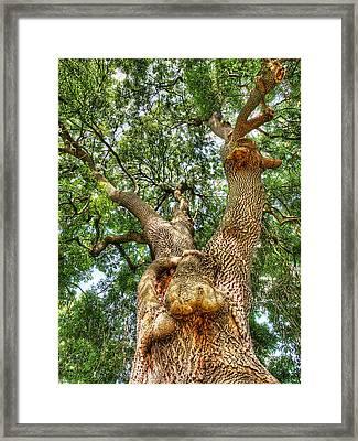 Gnarled Old Tree Vertical Framed Print by Gill Billington