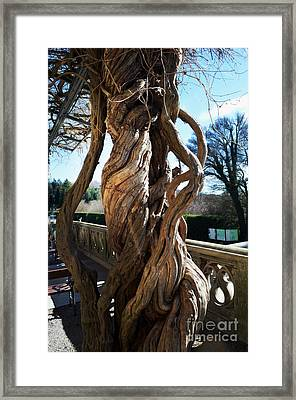 The Biltmore Estate - Wisteria -  Luther Fine Art Framed Print by Luther Fine Art