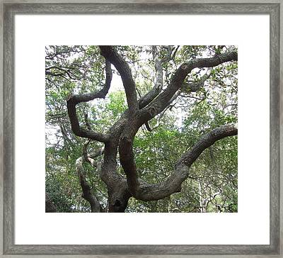 Framed Print featuring the photograph Gnarled Tree by Cathy Lindsey