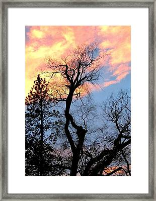 Gnarled Tree Silhouette Framed Print