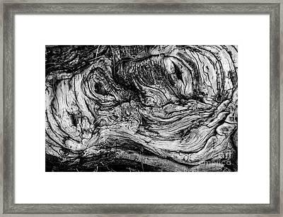 Gnarled Wood Framed Print by Amy Cicconi