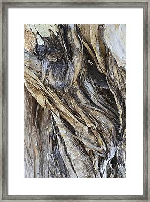 Gnarly Framed Print by AnnaJo Vahle