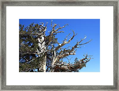 Gnarly Branches Framed Print