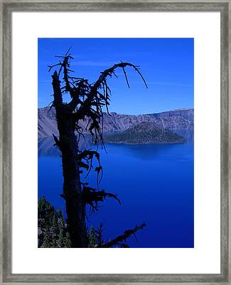 Gnarly Crater Tree Framed Print by Roberta Hayes