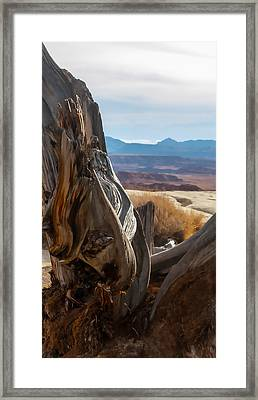 Gnarly Desert Cypress In Utah Framed Print