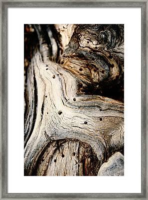 Gnarly Framed Print by Leanna Lomanski